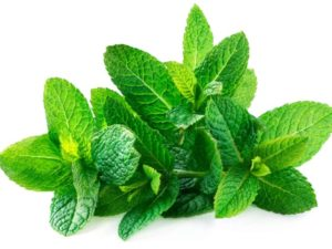mint Chinese herbs